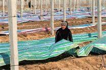 防雨彩条布品牌性能/防水彩条布结构形式