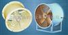 CT35-5,CT35-6.3,CT35-7.1耐高温防油防潮轴流风机